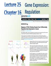 Chapter 16 - Gene Expression Regulation
