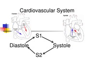 Cardiovascular System student