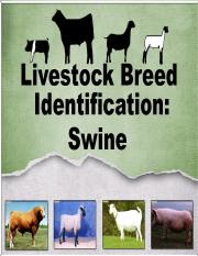 Livestock Breed ID Swine (AGR100)