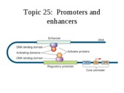 Topic 25, promoters and enhancers.ppt.edu