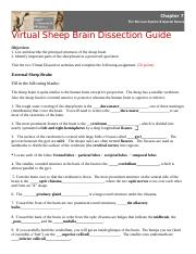 Virtual Sheep Brain Dissection Assignment.docx