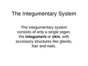 Integumentary System Lecture Slides