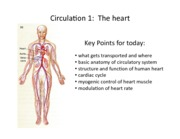 23-Circulation 1 revised
