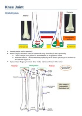 4. Knee Joint