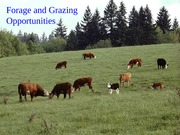 6. Beef Forage and Grazing Opportunities