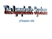 Chapter 8 Lymphatic System 2011