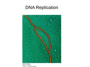 Lecture 8 DNA Replication
