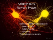 24+nervous+systems-14