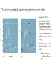 Action Potentials.pdf