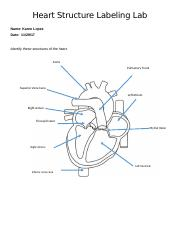 heart12:4:17 docx - Heart Structure Labeling Lab Name Rosa