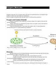 Inorganic Molecules.docx
