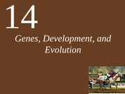 Ch14 Lecture-Genes, Development, and Evolution