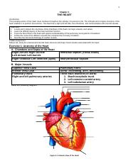 1-The Heart.pdf