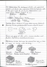 Cell Differentiation (lecture notes)