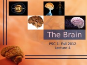 DAY4_The.brain_10.10.12.ppt