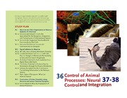 CHAPTER 36-38 NEURAL CONTROL AND INTEGRATION