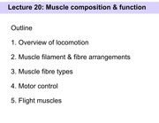 Slides 20 - Muscle composition and function