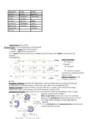 Bio 181 cheat sheet 1 copy
