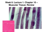 Z331 Fall 2010 Ecampus Week 6 Lecture 1 Review Posted