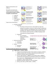 Week 6 Cell interactions and Adhesion.docx