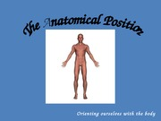 1.1 Anatomical Position and Basic Movements