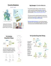 Bioc385i-Topic24-PyrimidineMetab.pdf