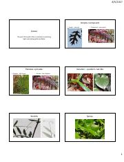 Module 2 Unit 6 - Leaves HD.pdf