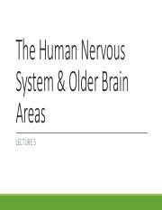 Lecture 5 The Human Nervous System  Older Brain Areas
