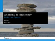 A&P Lecture 12 - Endocrine System.pdf