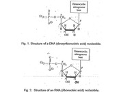 BIOS 452 - DNA Lecture 1- Nucleic Acids Spring 2014 figures - Lecture Notes