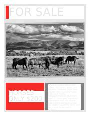 for sale horses