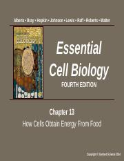Lecture 13 - Chapter 13 How Cells Obtain Energy From Food.ppt.pptx