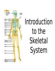 Intro%20and%20Axial%20Skeleton%20PPT_updated
