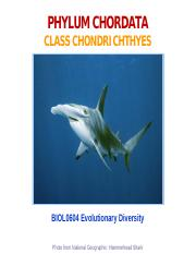 18-Chondrichthyes-2014-ppt