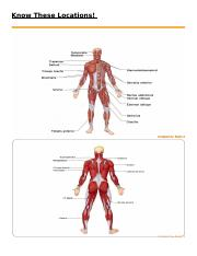 Bones and Muscle Study Review .docx