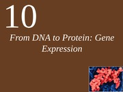Ch10 Complete-From DNA to Protein