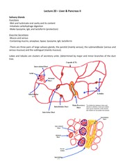 Lecture 20 – Liver & Pancreas II
