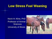 Low Stress Weaning of Foals
