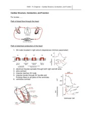 Cardiac Structure Conduction Function