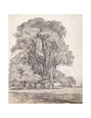 Constable-Elm_Trees_1817