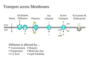 Membrane Dynamics Figs BW Corrected