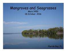 Lecture 19 18 Oct Mangroves and Seagrasses