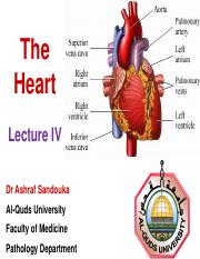11- The Heart - Lecture IV.pdf