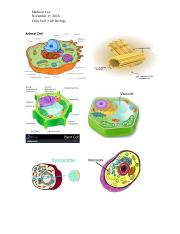 Cell Unit Visuals.docx