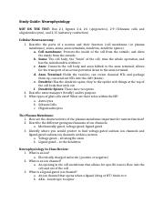 0. Neurophysiology Review Study Guide.docx