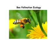 Lecture 13 - Pollination and bees (1)