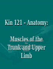 Kin121_L7_muscles_trunk_upperlimb_posted