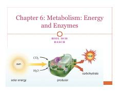 BIOL 1010 Chapter 06 Metabolism Energy and Enzymes students