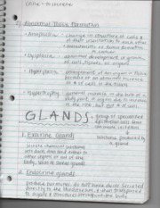 Ch2 Glands Notes
