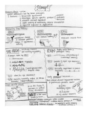 Review Sheet-Sleep